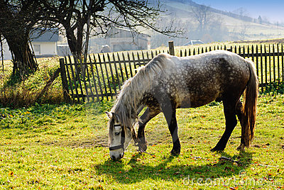 Horse on pasture in evening glow