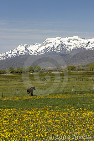 Horse in pasture with mountains