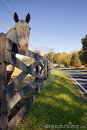 Horse Peering Over Fence