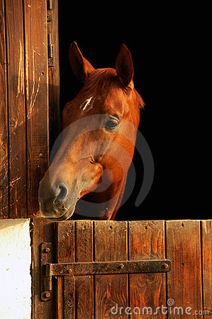 Free Horse Portrait Royalty Free Stock Photography - 2077297