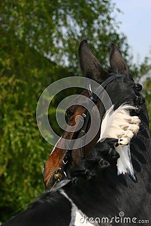 Free Horse Portrait Royalty Free Stock Photos - 745818