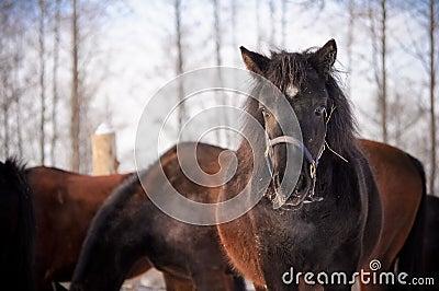 Horse portrait in the herd