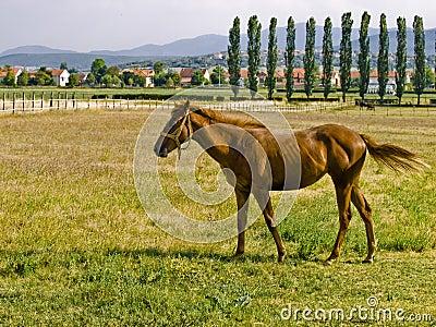 Horse pose 2