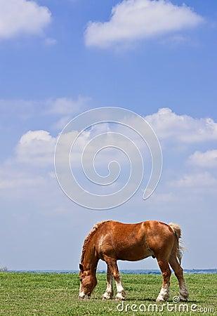 Horse and prairie