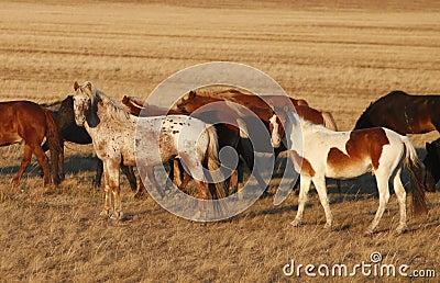 Horse on the prairie