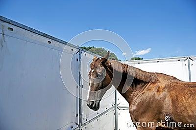 Horse profil