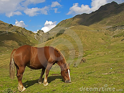 Horse at Pyrenees