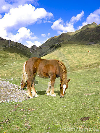 Horse at the Pyrenees
