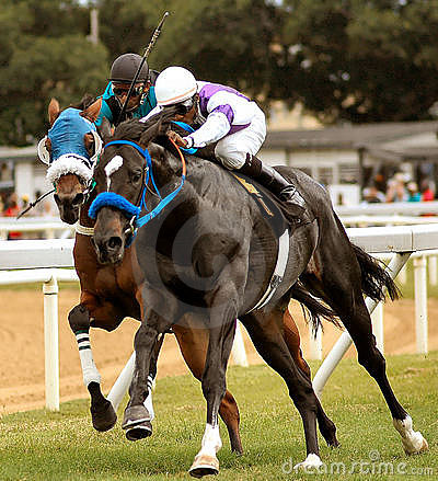 Free Horse Racing Stock Image - 113461