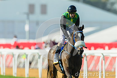 Horse Racing Jockey Action