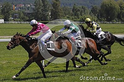 Horse racing - June Grand Prix in Prague Editorial Photo