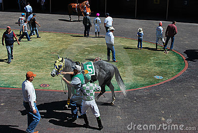 Horse racing warm up Editorial Stock Photo
