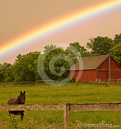 Horse and rainbow