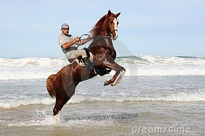 Horse rearing in sea