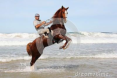 Horse rearing in sea