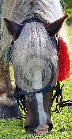 Horse with red rosette