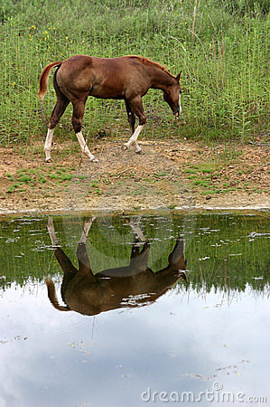 Free Horse Reflection Stock Photography - 215242