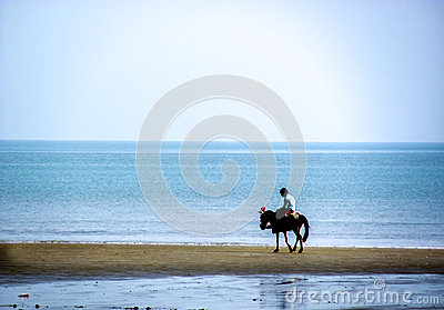 Horse and rider roaming on a beach Editorial Photography