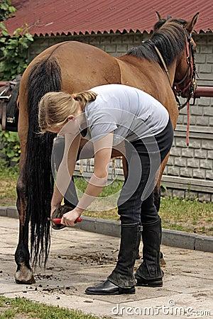Free Horse Riding Royalty Free Stock Photos - 5507768
