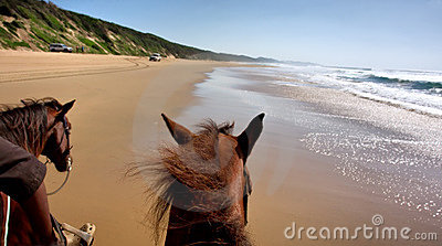 Horse riding on beach - view from the horse