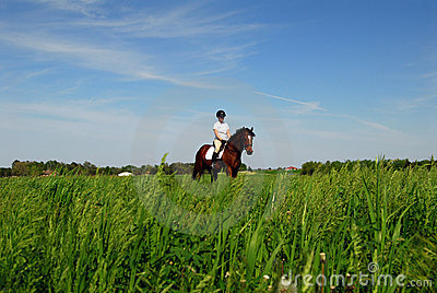 Horse riding in hay field