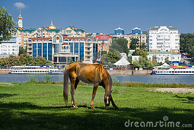 Horse at the river against the background of city