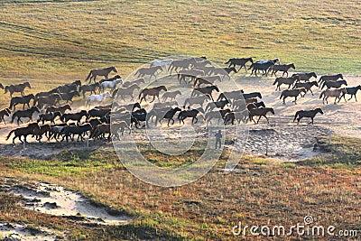 Horse running in prairie
