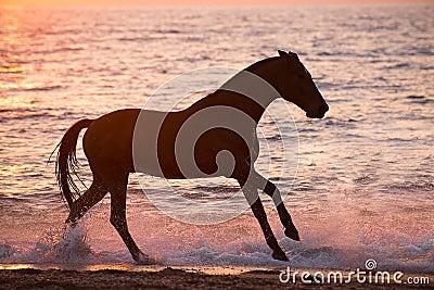 Horse running through water