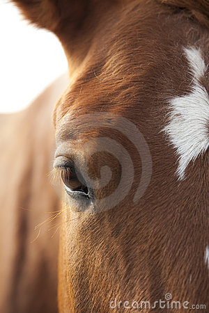 Horse s Eye