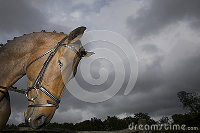 Horse s Head Against Moody Sky