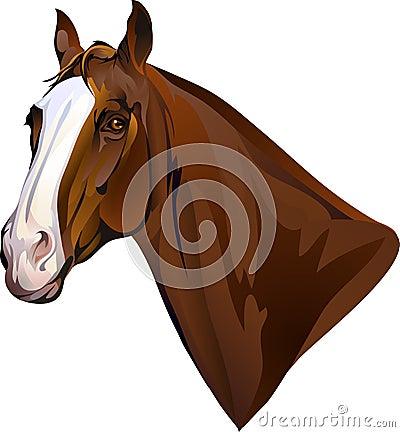 horses head turning looks