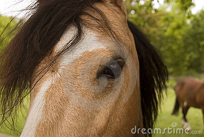 Horse`s  melting gaze