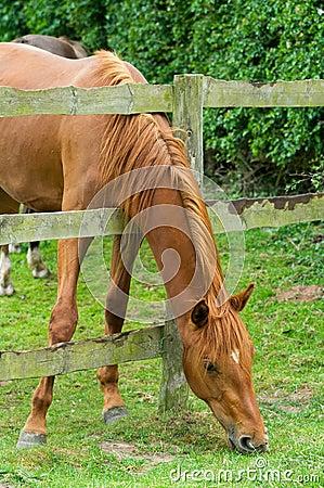 Horse s neck