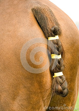 Horse s tail