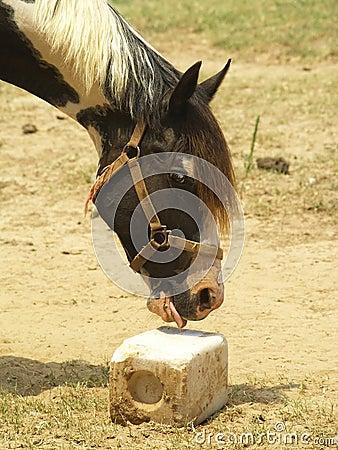 Horse at Salt Lick