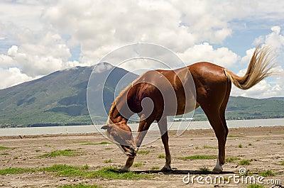 Horse scratching flies