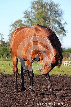 Horse scratching itself