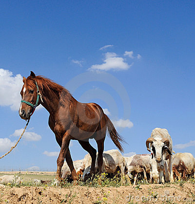Horse and sheep