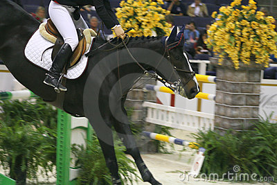 Horse Show Editorial Image