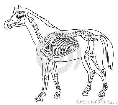 horse skeleton stock photography image 33356872. Black Bedroom Furniture Sets. Home Design Ideas