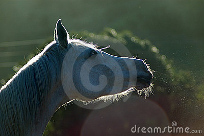 Horse snort