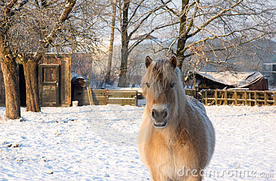 Horse in the snow