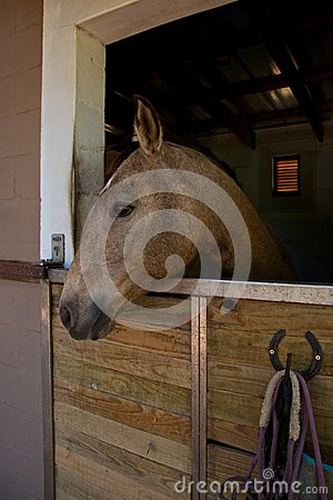 Horse, stable