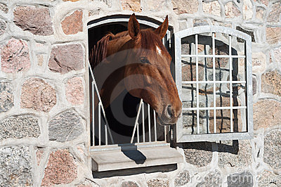 Horse stable Blue Hors Editorial Photography