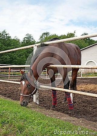 Horse in stabling