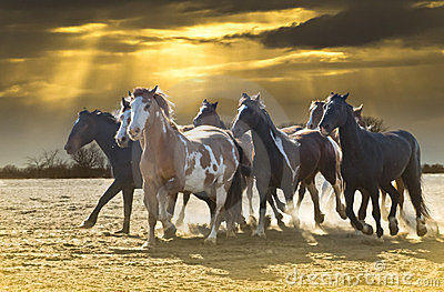 Horse Stampede against beautiful sky