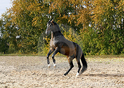 Horse standing on his two legs