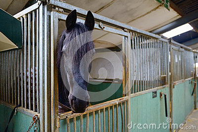 horse in manege stable