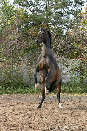 A horse standing on two legs