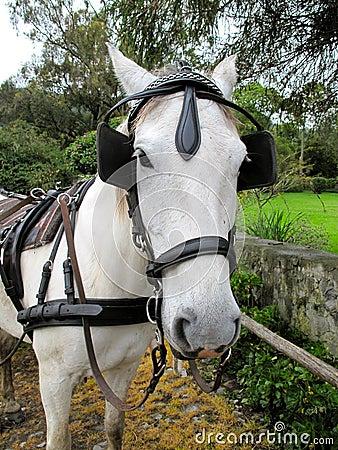 A horse staring at the camera
